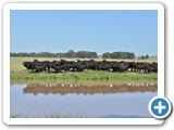 Raff Angus Land Aggregation Auction  24 July 2015
